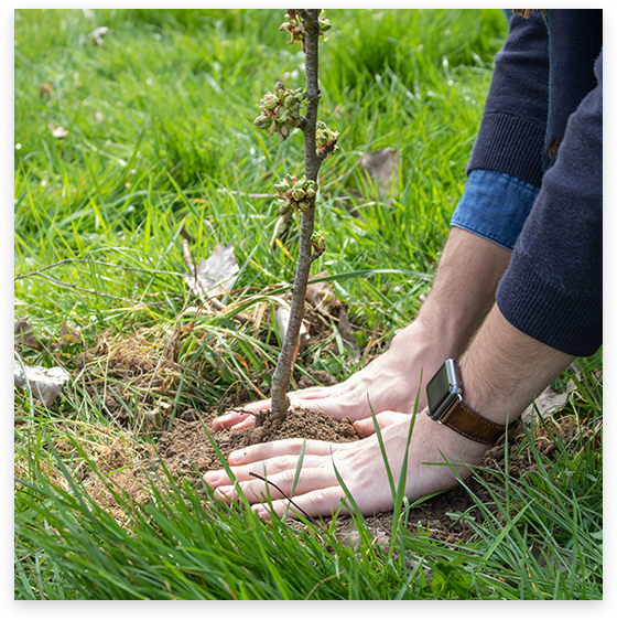 Photo François Dubois qui plante un arbre